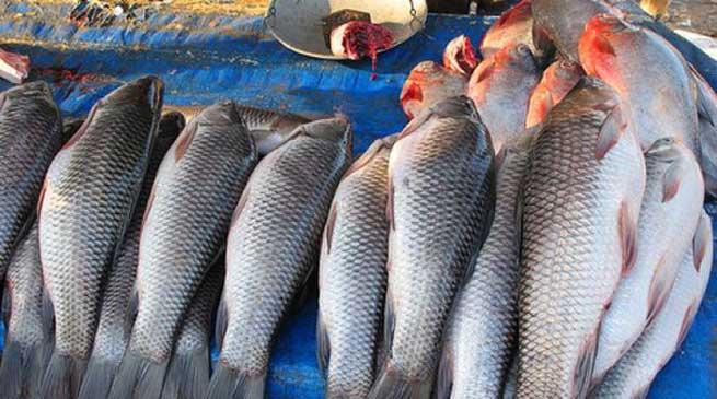 आयातित मछलियों में Formalin की होगी जांच