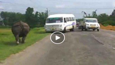 Photo of Watch Video- काजीरंगा के नेशनल हाईवे में भागते हुए गैंडे का वीडीओ हुआ वायरल
