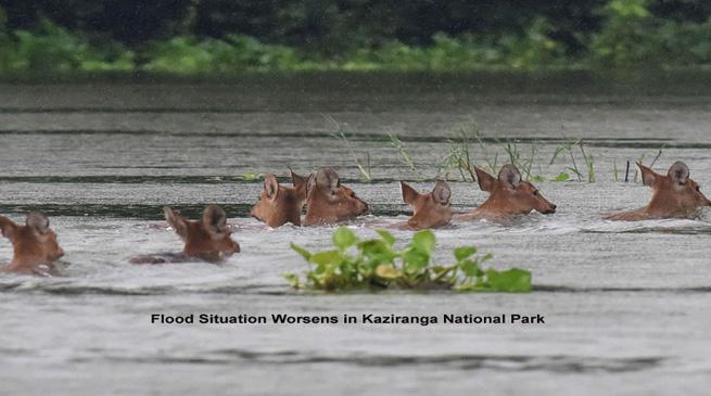 बाढ़ में पूरी तरह डूबा काजीरंगा राष्ट्रीय उद्यान