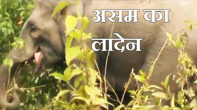 असम में लादेन का क़हर, 30 को मौत के घाट उतार चुका है