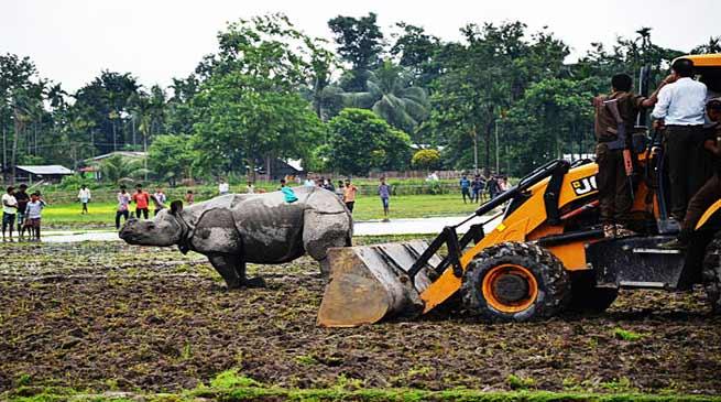 असम: गाँव में घुसा गेंडा, वापस खदेड़ने में वन विभाग विफल