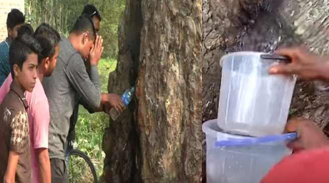 असम में हुआ चमत्कार, पेड़ के तने से निकल रही है पानी की धार